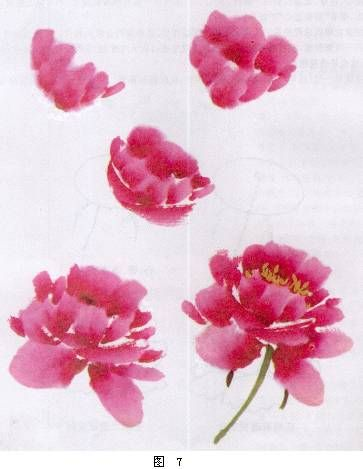 Drawn peony tutorial Peony Peony paint Pinterest 25+