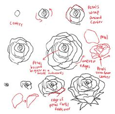Drawn peony tutorial Shutterstock roses Pictures Imgur Photos