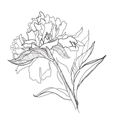 Drawn peony vector 85 TemplatesPlantsColoring Peony about Pinterest