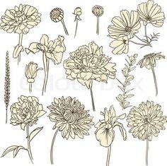 Drawn peony vector Flower lotus peony  tattoos