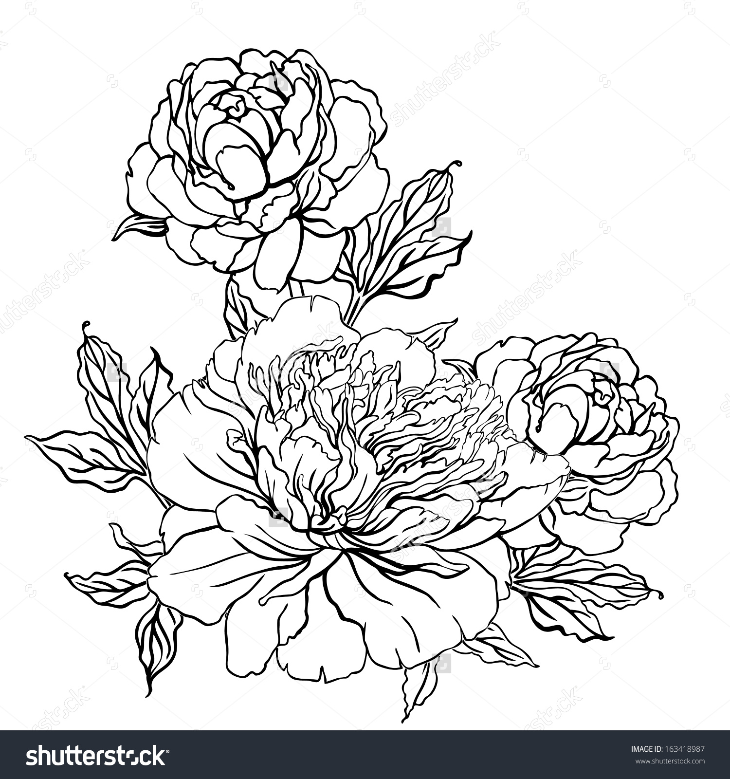 Drawn peony vintage Peony: Flowers With Drawing Hand