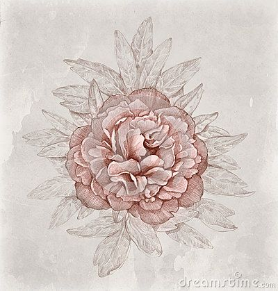 Drawn peony vintage floral Flower Vintage about Peony 118