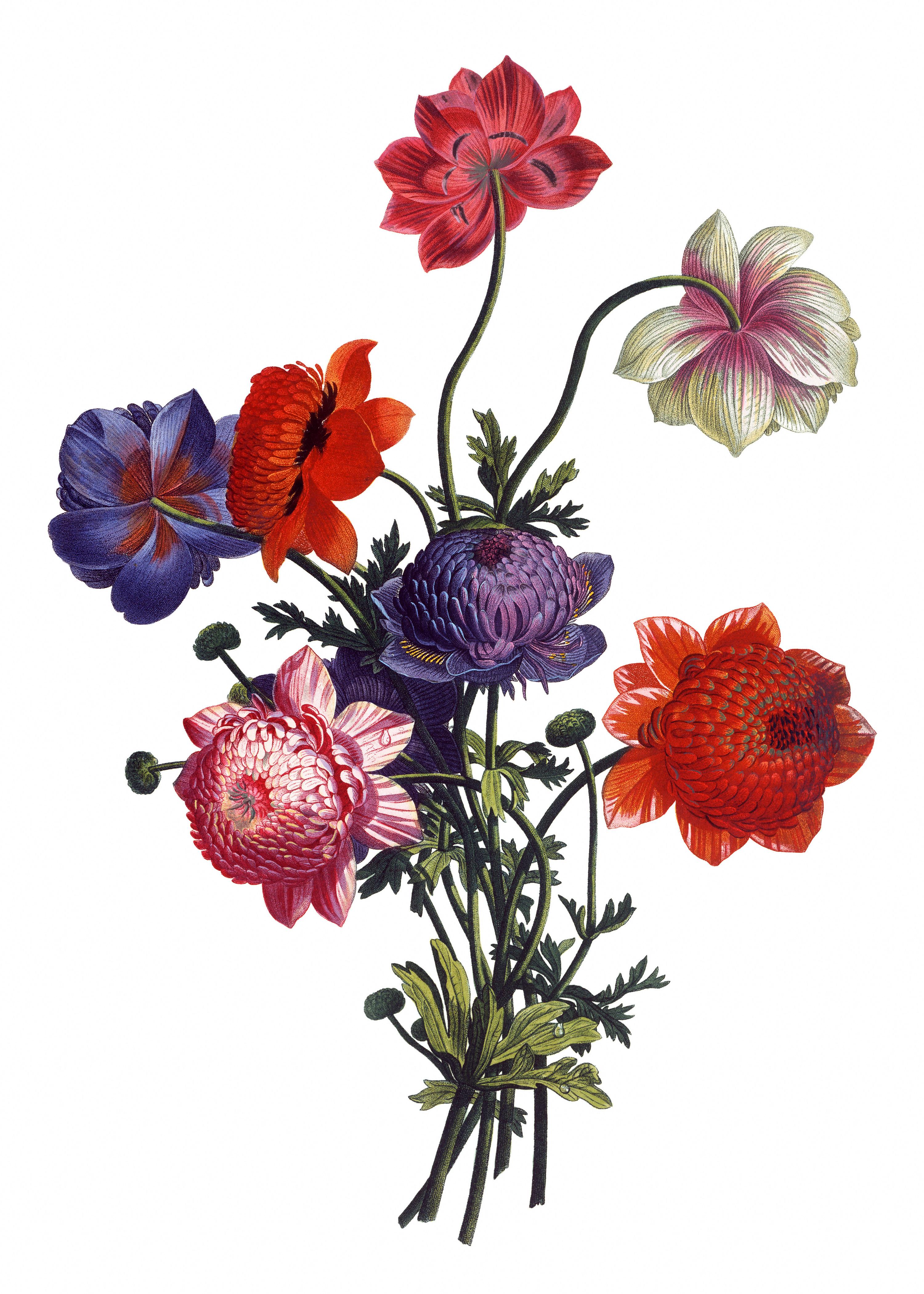 Drawn peony vintage floral 27 Vintage of The IllustrationsIllustrations