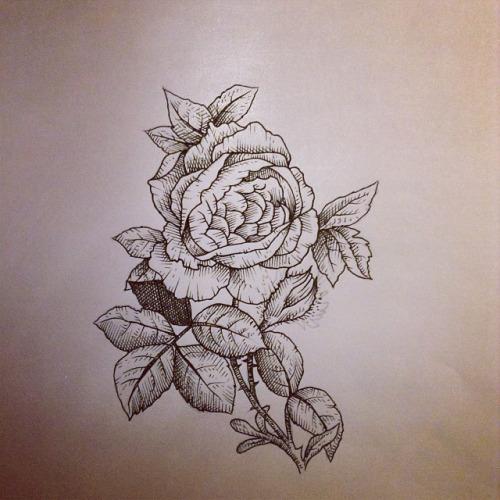 Drawn peony vintage rose Peony #peony  rose #roses