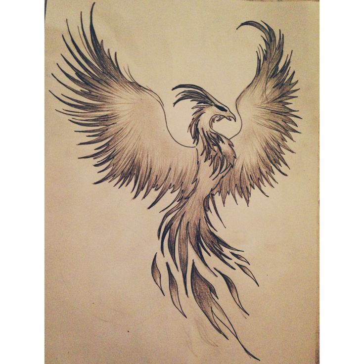 Drawn phoenix Con ideas con to how