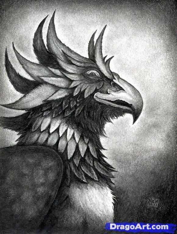 Drawn phoenix Drawn Griffin Step  a Fantasy How