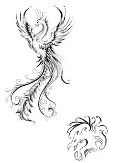 Drawn phoenix Phoenix Bird Phoenix drawing and Color drawings