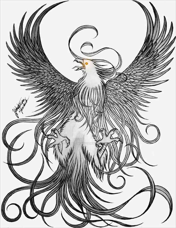 Drawn phoenix Phoenix Bird Premium This is Templates 21+