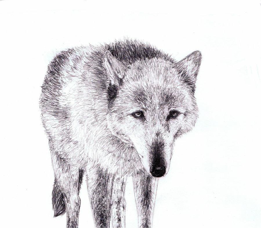 Drawn photos wolf Ersayer5 wolf drawn on by
