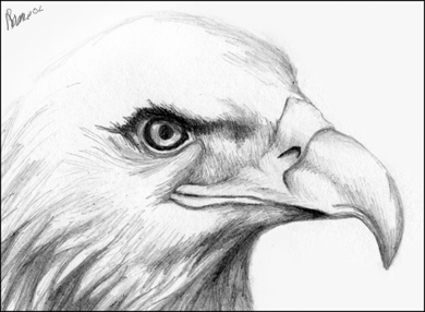 Drawn pice How Head artist like Eagle