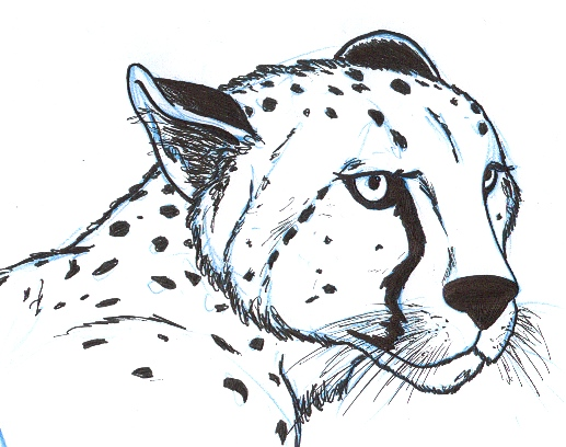 Drawn pice cheetah Head by BentheBeard BentheBeard Head