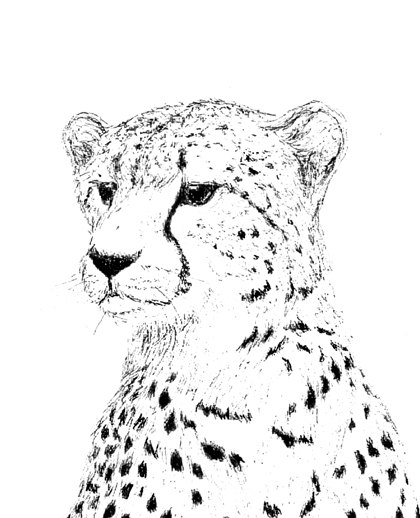 Drawn pice cheetah Ink Drawing Embellished Embellished Ink