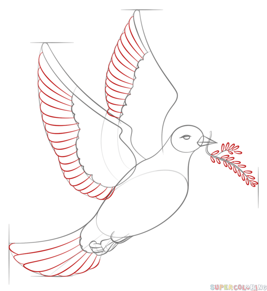 Drawn pice dove Peace step a How Drawing