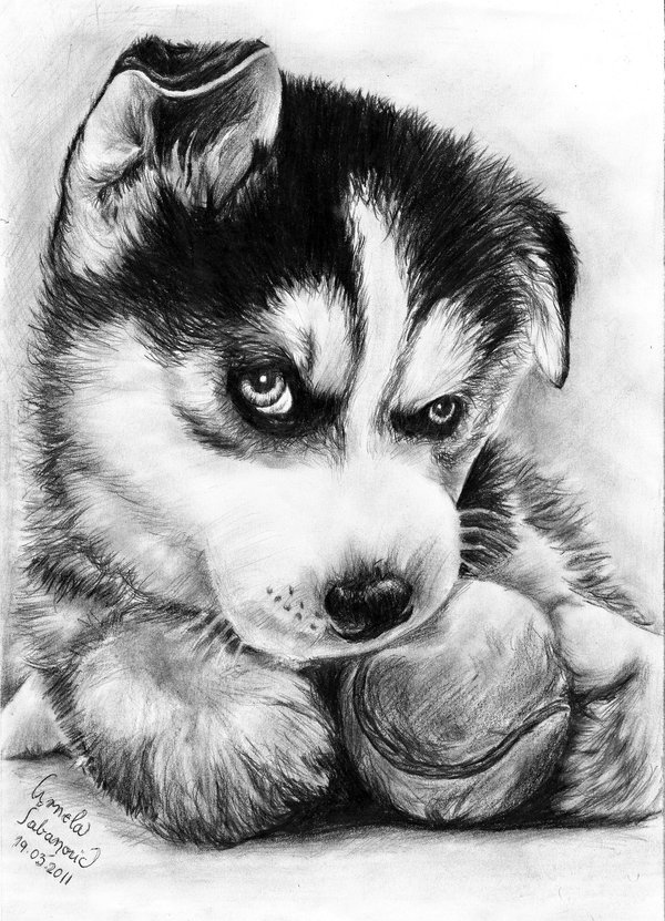 Drawn husky adorable Little cute little mary11dc mary11dc