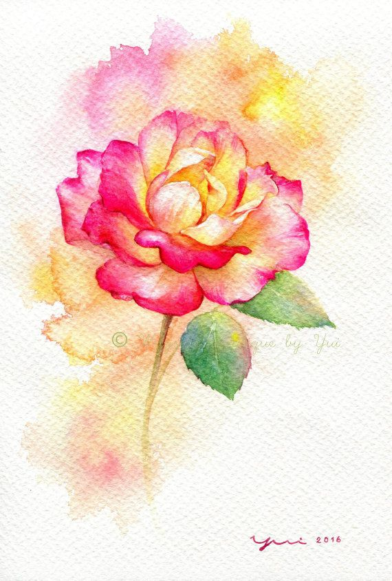 Drawn pice rose 25+ 7 rose inches watercolor