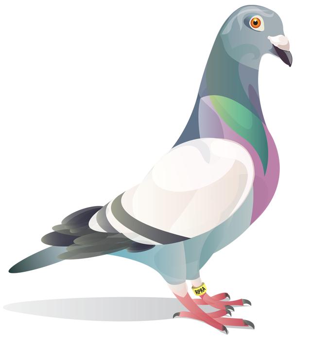 Drawn pidgeons Search Pinterest Search pigeon