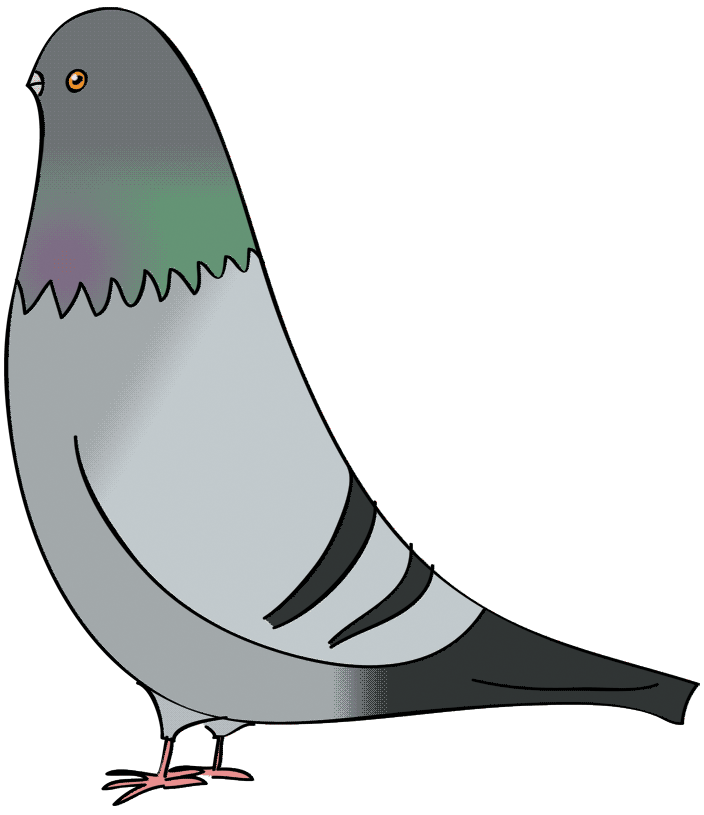 Drawn pigeon At Flying Pigeon Flop Flip