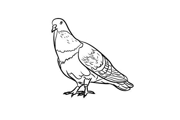 Drawn pidgeons ~ on Illustrations Drawing Market