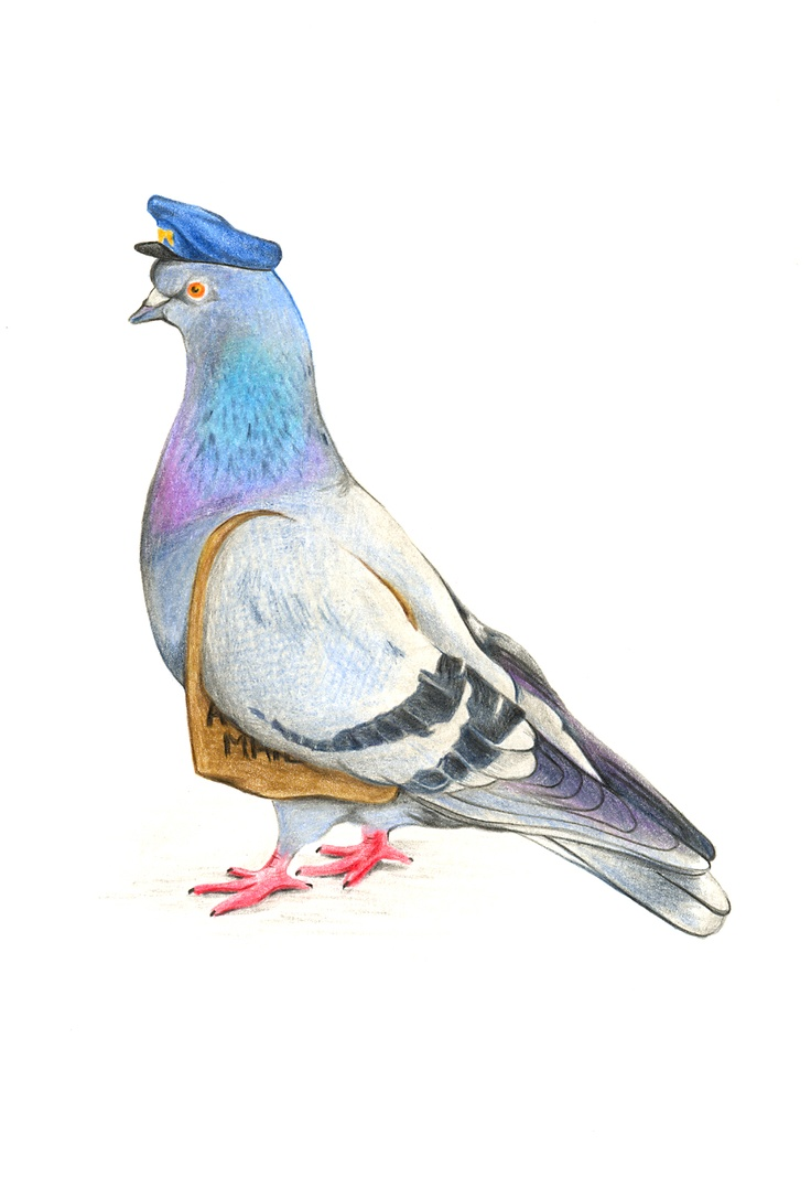 Drawn pigeon Love drawing drawing Google carrier