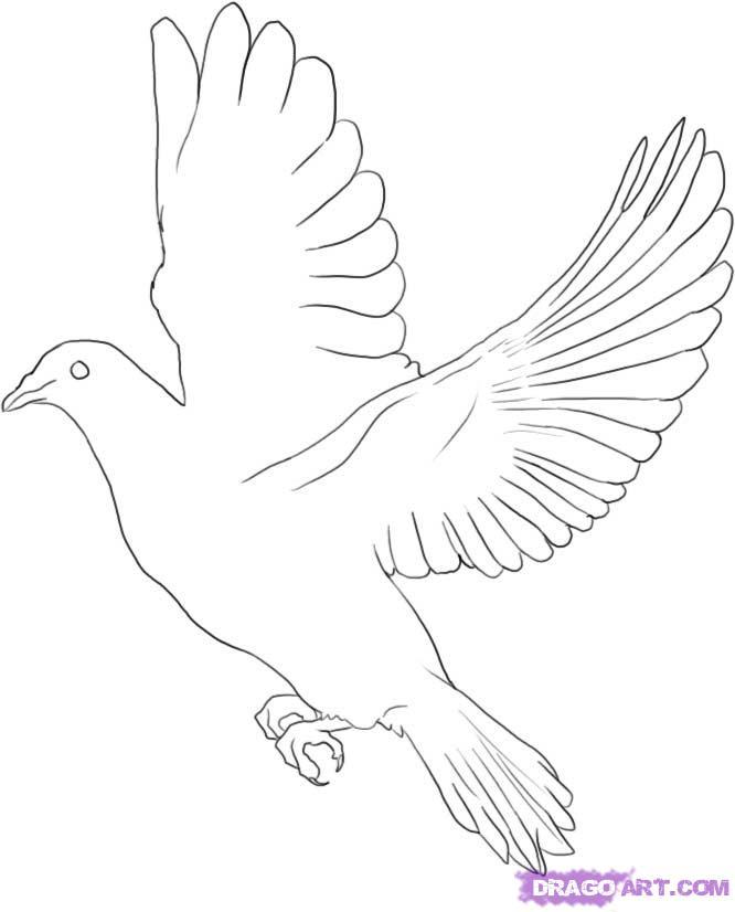Drawn pice dove White Dove A White Draw
