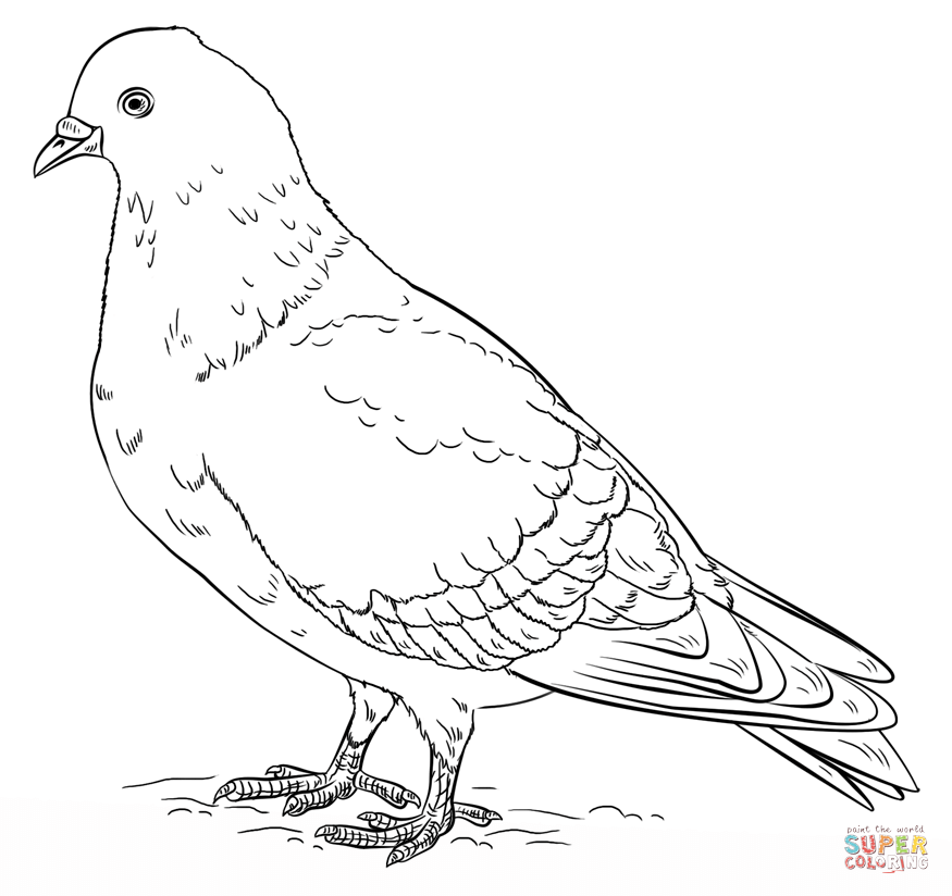 Pidgeons clipart coloring Rock Pages Free coloring Coloring