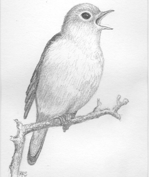 Nightingale clipart maya bird  DRAWINGS best 110 on