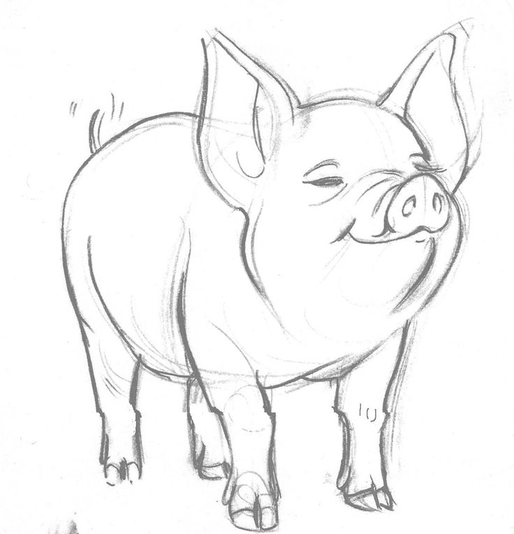 Drawn pig On 25+ drawing ~lonelyangelsansa web