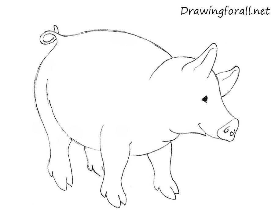 Drawn pig Drawn Cow  Cow Kids net a