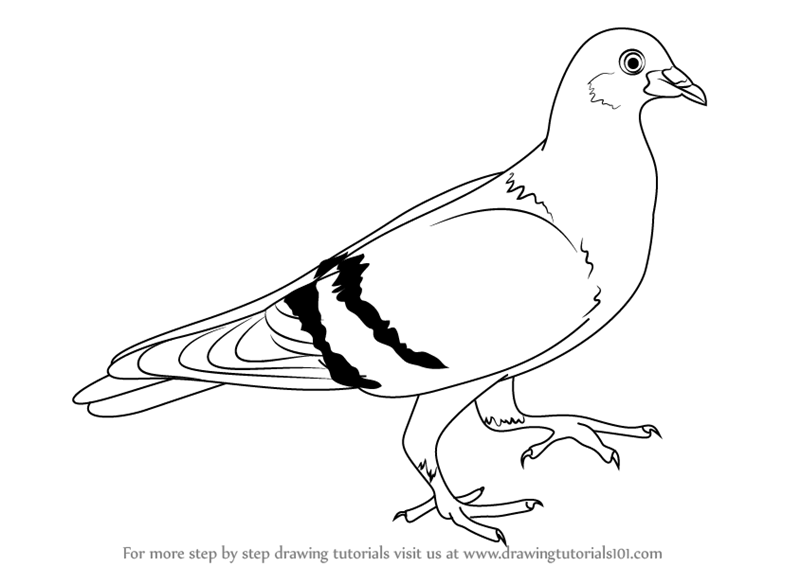 Drawn pigeon Drawing Drawing Images Art Pic