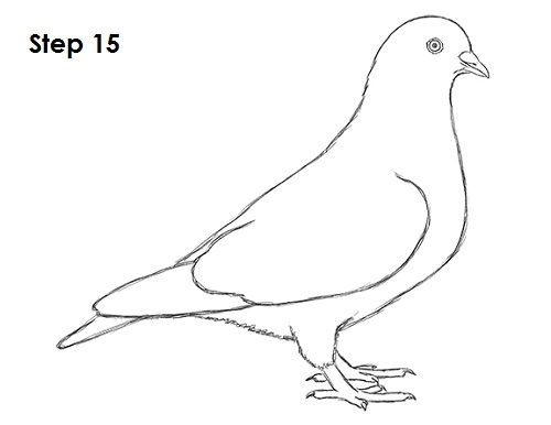Drawn pigeon Drawing Pigeon pigeon Cute photo#9