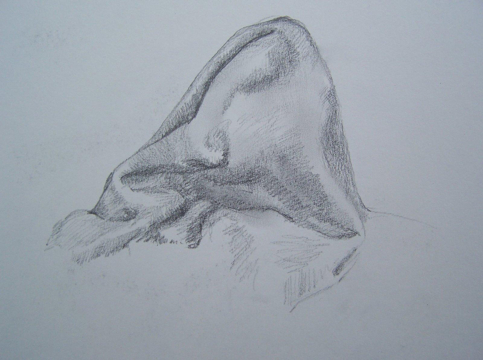 Drawn pillow durer Pillow Durer's a drew He
