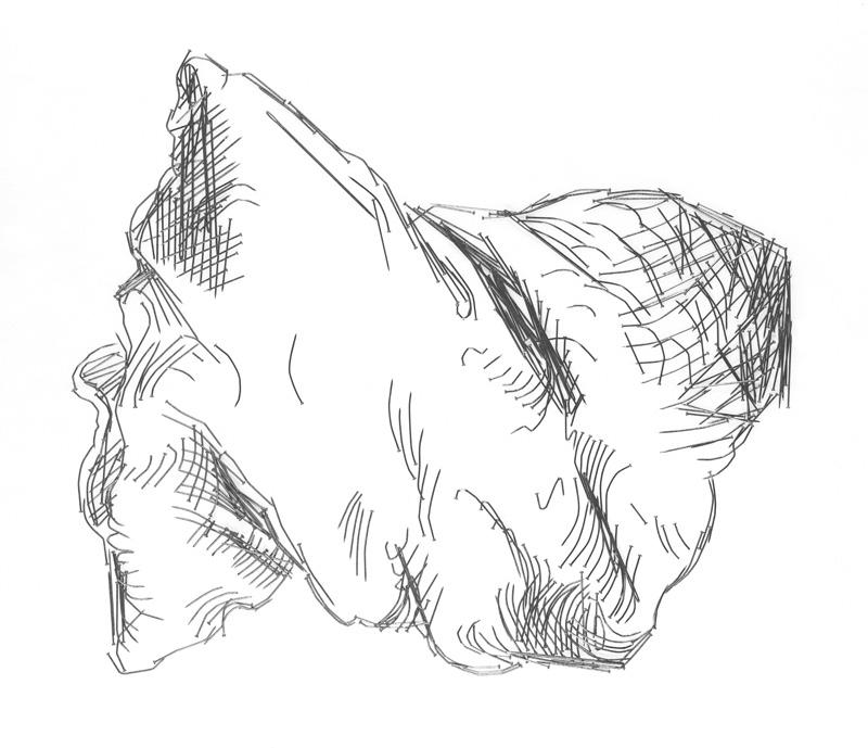 Drawn pillow durer Pillows Collection West (After Durer)