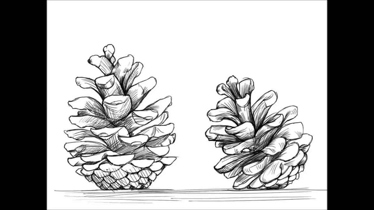 Drawn pine cone YouTube To How To Pinecone