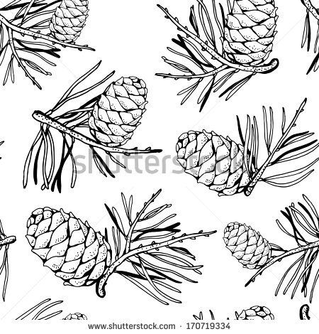 Drawn pine cone Cones Pine about drawing line