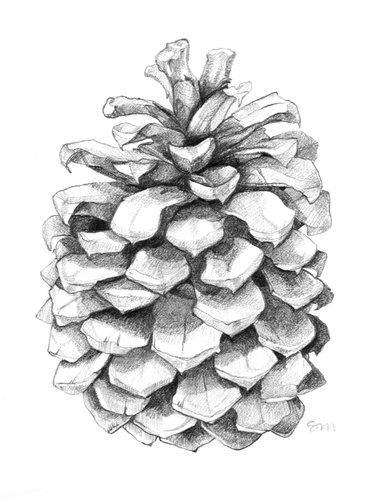 Drawn pine cone Pinterest 33  life about