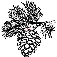 Drawn pine cone Images Stock Cone result Image