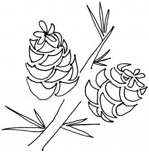 Drawn pine cone Elsie pinecones coloring advent calendar