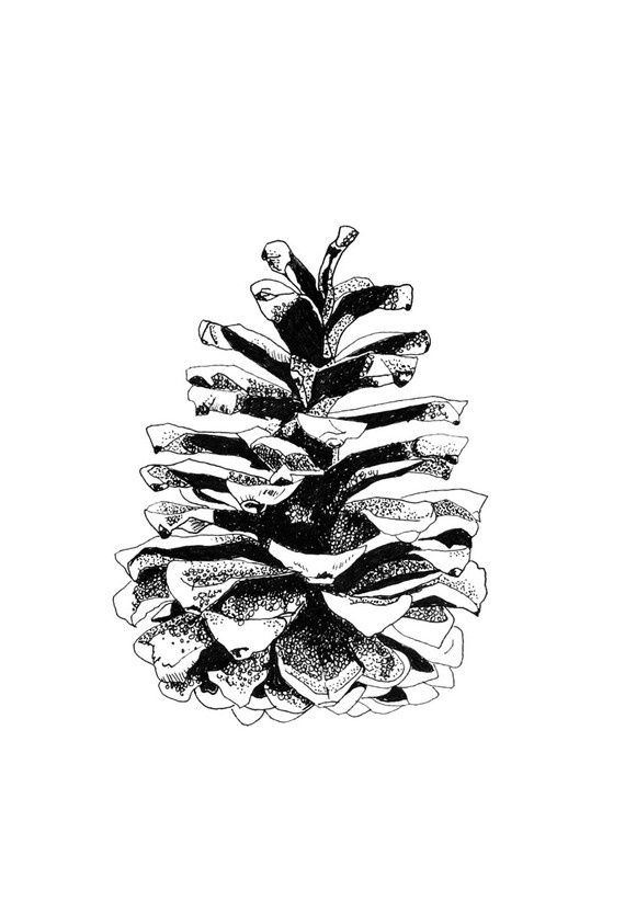 Pine Cone clipart abstract On sketch Google best images