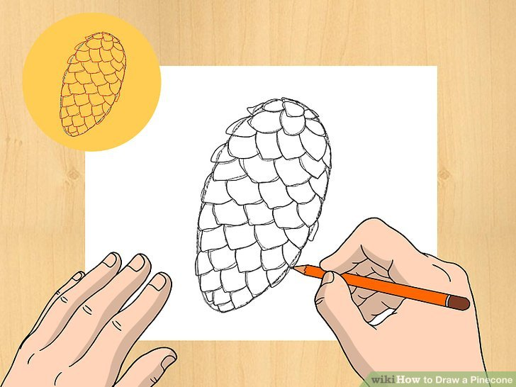 Drawn pine cone Pictures) (with a titled Image