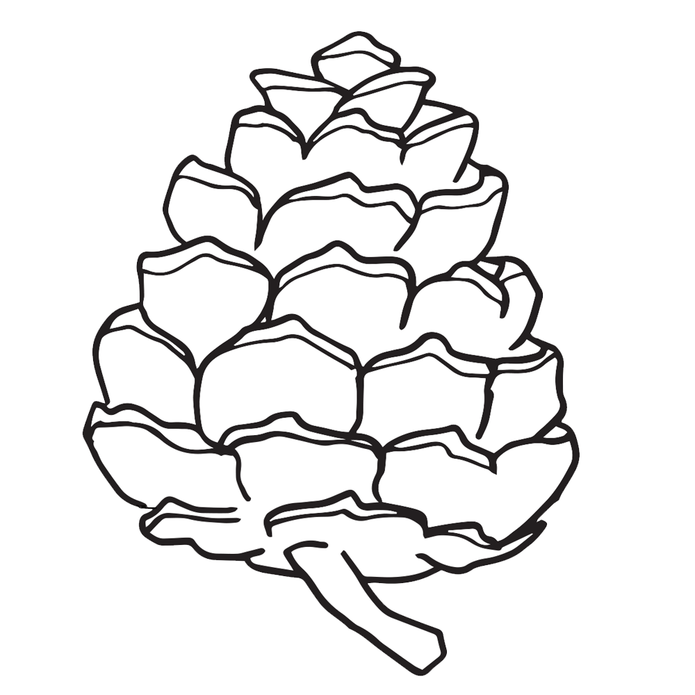 Pine Cone clipart simple & Pine Pine Clipart Worksheets
