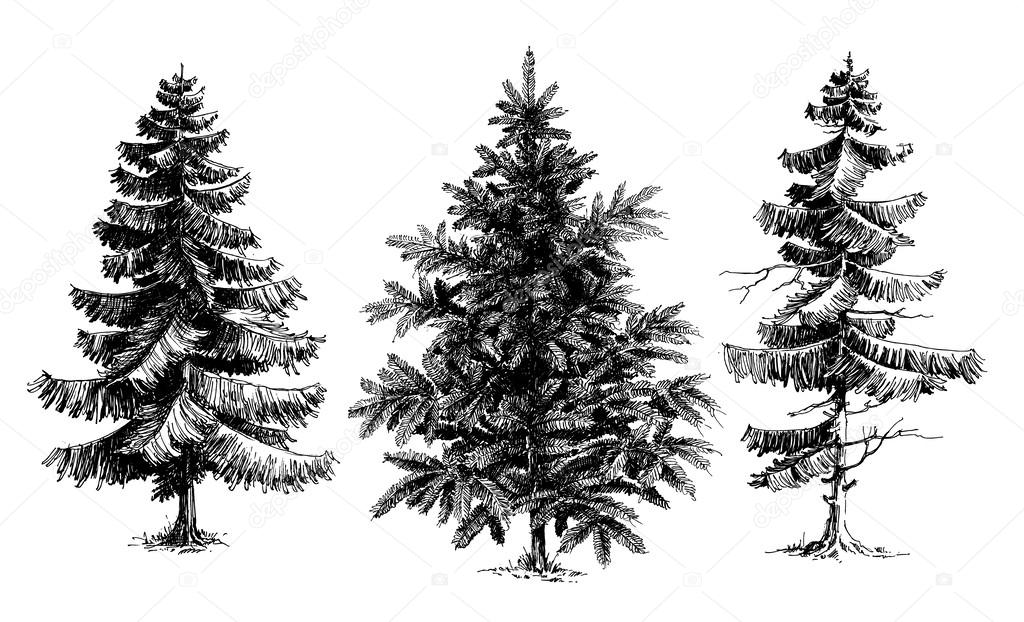 Drawn pine tree #10