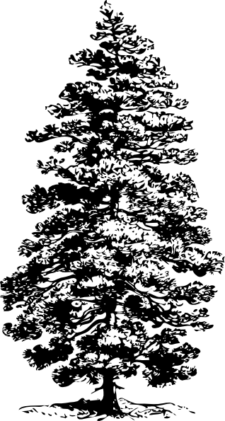 Drawn pine tree #14