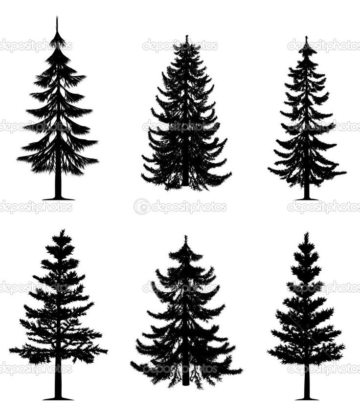 Drawn fir tree realistic Bushes Draw images Find 13