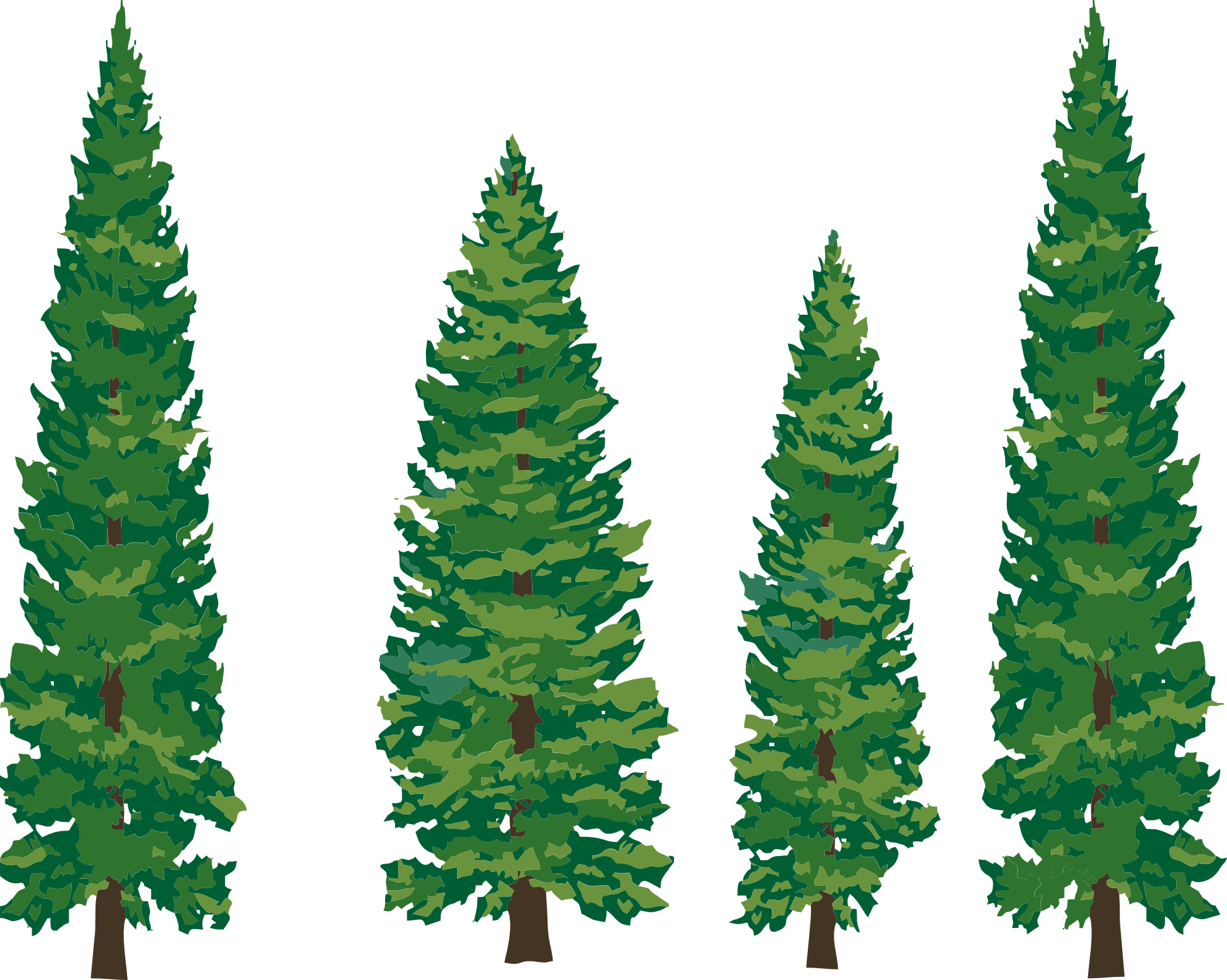 Pine Tree clipart forest tree Tree Drawing Clipart Drawing Tree