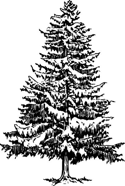 Drawn pine tree #3
