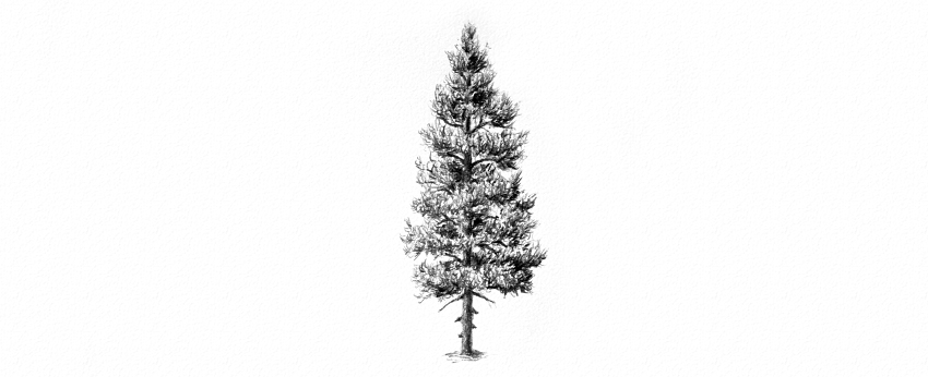 Drawn pine tree #4