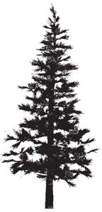 Drawn tattoo pine tree #1
