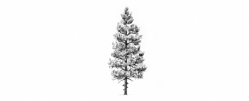 Drawn pine tree #8