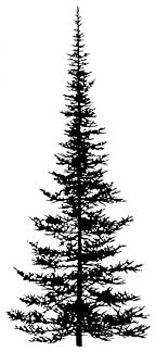 Drawn pine tree #6