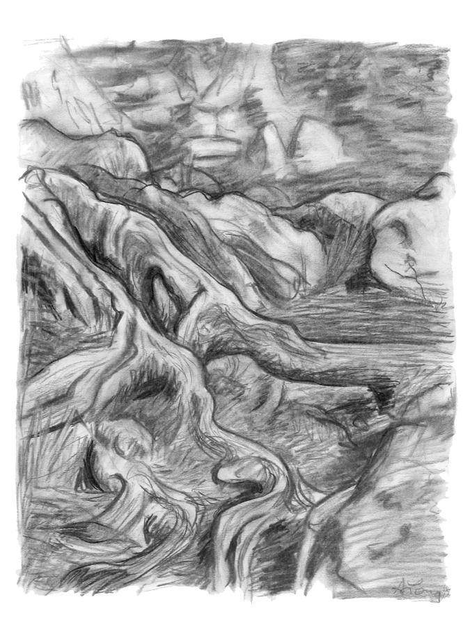 Drawn pine tree vector Swampy Area Of Charcoal In